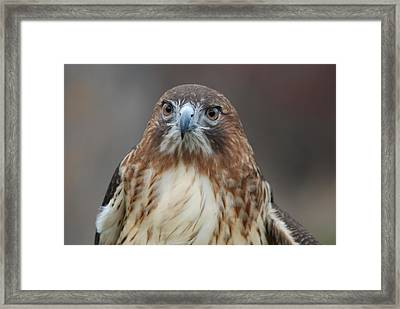 Framed Print featuring the photograph Red Tailed Hawk by Richard Bryce and Family