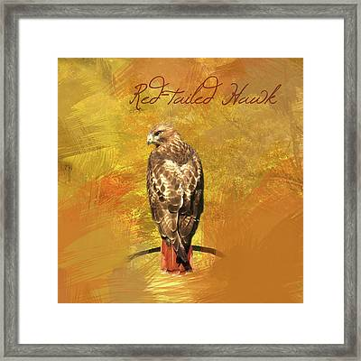 Red-tailed Hawk Watercolor Photo Framed Print by Heidi Hermes