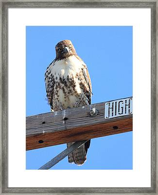 Red Tailed Hawk . What You Lookin At Framed Print by Wingsdomain Art and Photography