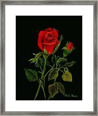 Red Tango Rose Bud Framed Print