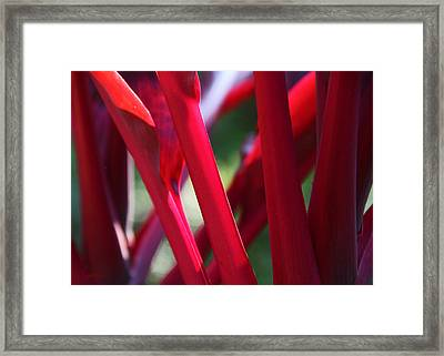 Red Ti  Framed Print