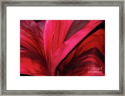 Red Ti Leaf Plant - Hawaii Framed Print