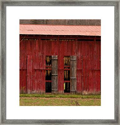 Red Tobacco Barn Framed Print by Douglas Barnett