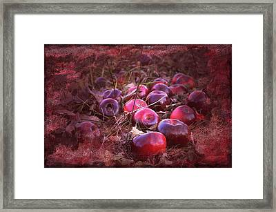 Red Tones Framed Print by Damijana Cermelj