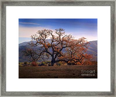 Red Top Tree Framed Print by Frank Bez