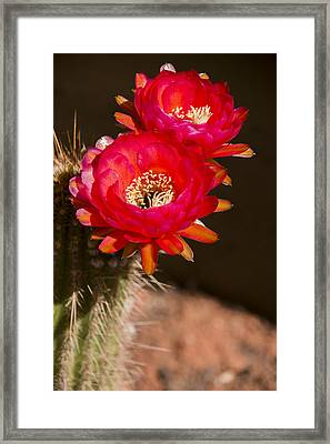 Red Tops Framed Print