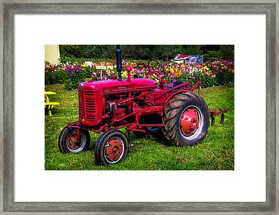 Red Tractor Dahlia Gardens Framed Print by Garry Gay