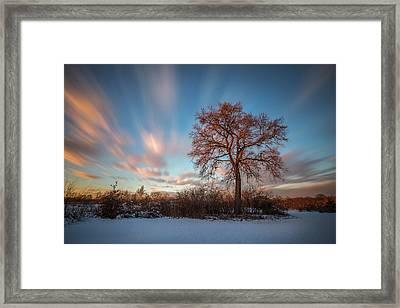 Red Tree Framed Print by Davorin Mance