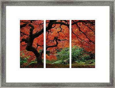 Red Tree Framed Print by James Roemmling