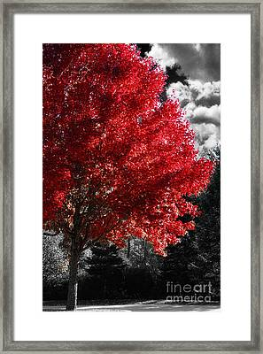 Red Tree Framed Print by Mindy Sommers