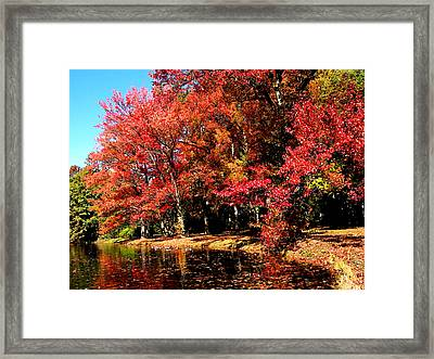 Red Trees By Lake Framed Print by Susan Savad