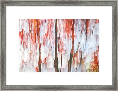 Red Trees On Lake Shore Framed Print by Elena Elisseeva