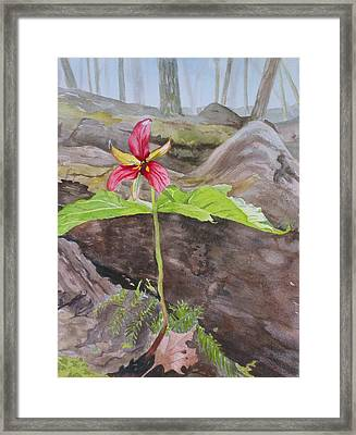 Red Trillium In The Spring  Framed Print by Debbie Homewood