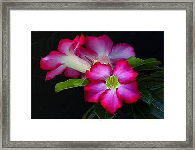 Framed Print featuring the photograph Red Tropical Flower by Ken Barrett