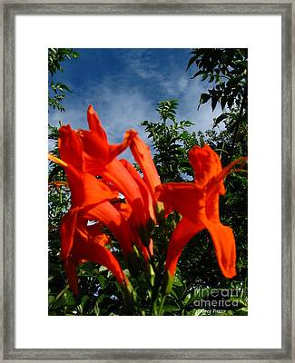 Red Trumpeter Framed Print by Greg Patzer