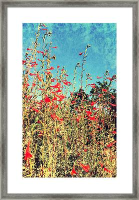 Red Trumpets Playing Framed Print