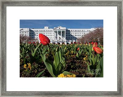 Red Tulip At The Greenbrier Framed Print