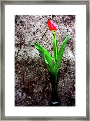 Framed Print featuring the photograph Red Tulip by Gray  Artus