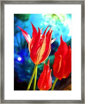 Red Tulip With Blue Ball Framed Print by Craig Perry-Ollila