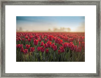 Red Tulips 2 Framed Print by Seattle Art Wall