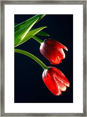 Red Tulips Framed Print by Dung Ma