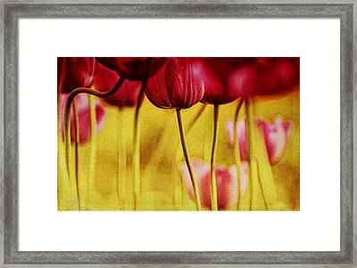 Red Tulips Framed Print by Iris Greenwell