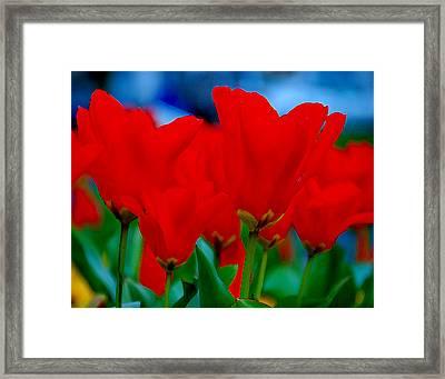 Red Tulips Framed Print by JoAnn Lense