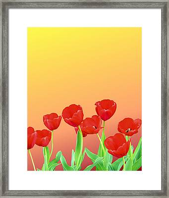 Red Tulips Framed Print by Kristin Elmquist