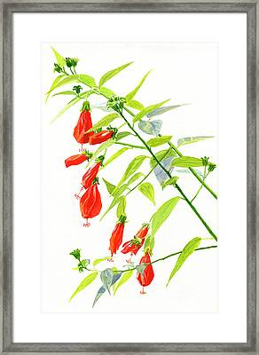 Red Turks Cap Hibiscus Framed Print by Sharon Freeman