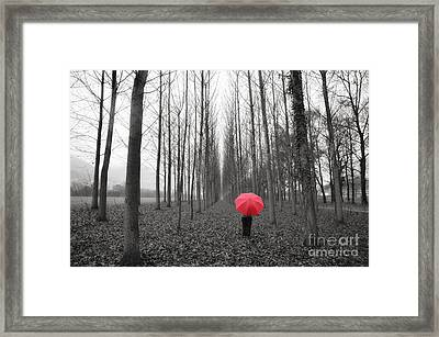 Red Umbrella In An Allee Framed Print
