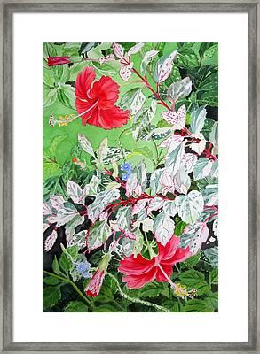 Red Variegated Hibiscus Framed Print by Vishwajyoti Mohrhoff