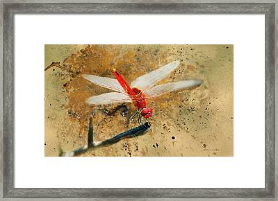 Framed Print featuring the photograph Red Veined Darter Dragonfly by Bellesouth Studio