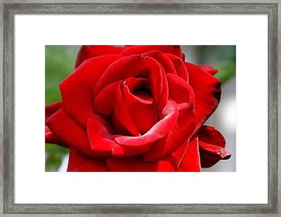 Red Velveteen Framed Print by Sonja Anderson