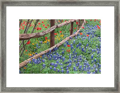 Red Versus Blue Framed Print
