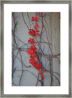 Red Vines Framed Print