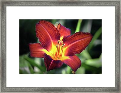 Framed Print featuring the photograph Red Volunteer. by Terence Davis