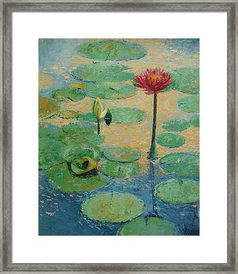 Red Waterlilly Framed Print