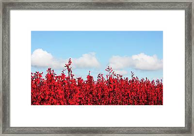 Red White And Blue Framed Print by Barbara  White
