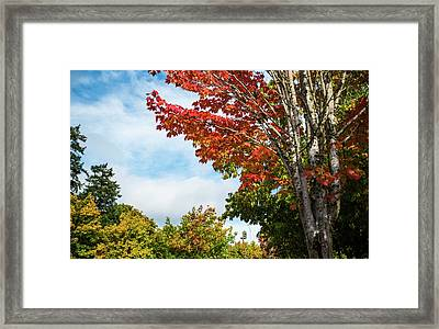 Red, White, And Blue Framed Print