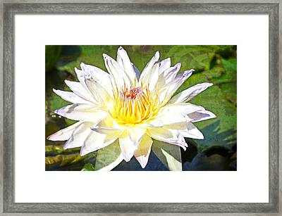 Red White And Yellow Framed Print