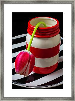 Red White Jar With Tulip Framed Print