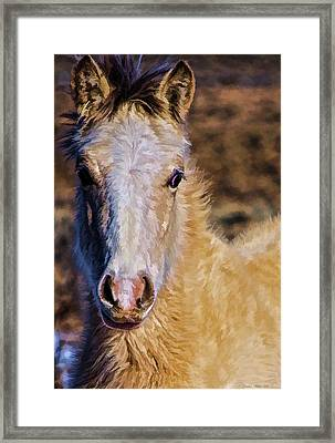 Red Willow Pony Framed Print