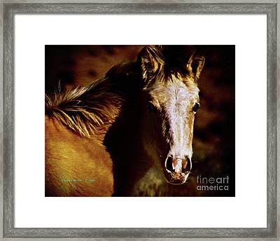 Red Willow Pony Lx Framed Print