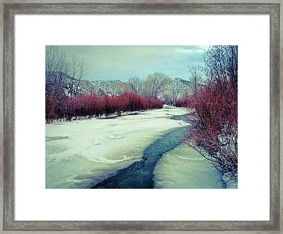 Red Willows On The Embudo Framed Print