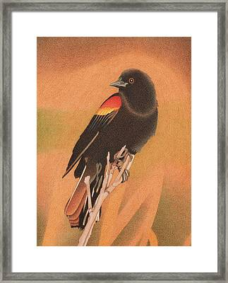 Red-winged Blackbird 3 Framed Print