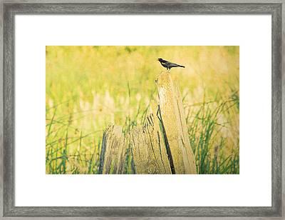 Red-winged Blackbird Framed Print by Bonnie Bruno