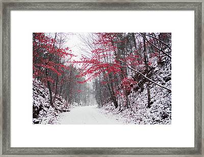 Red Winter Path Framed Print