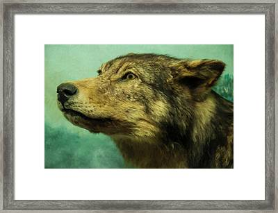Framed Print featuring the digital art Red Wolf Digital Art by Chris Flees