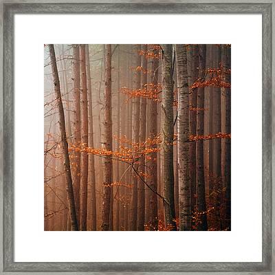 Red Wood Framed Print by Evgeni Dinev