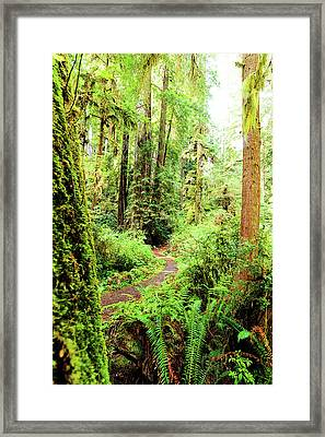 Red Woods Trail Framed Print